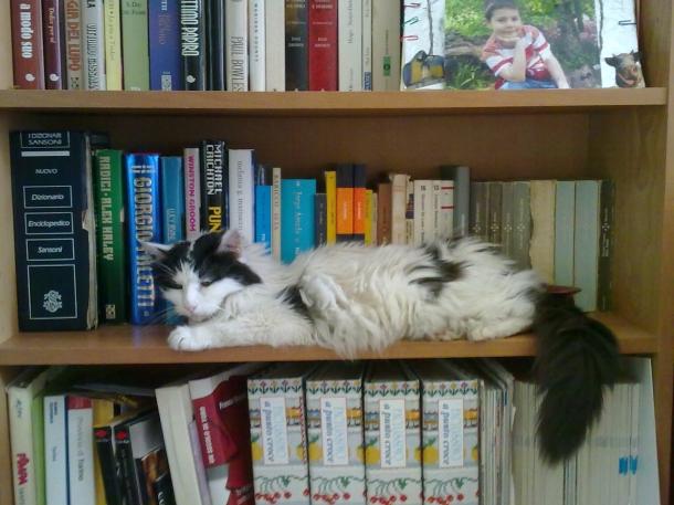 Silky sulla libreria